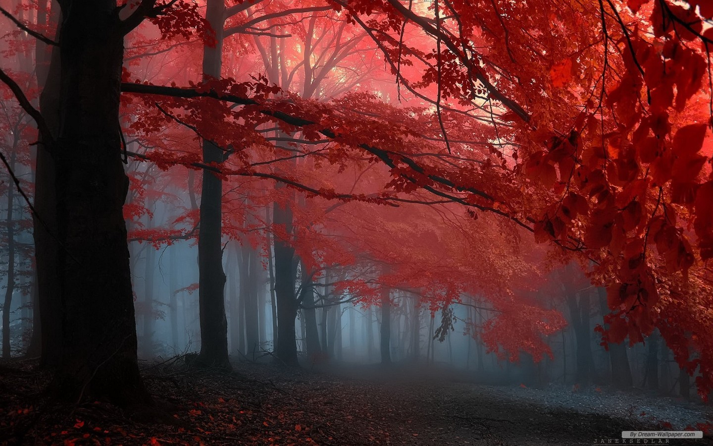 Free Nature wallpaperAutumn red leaves forest trees wallpaper 208