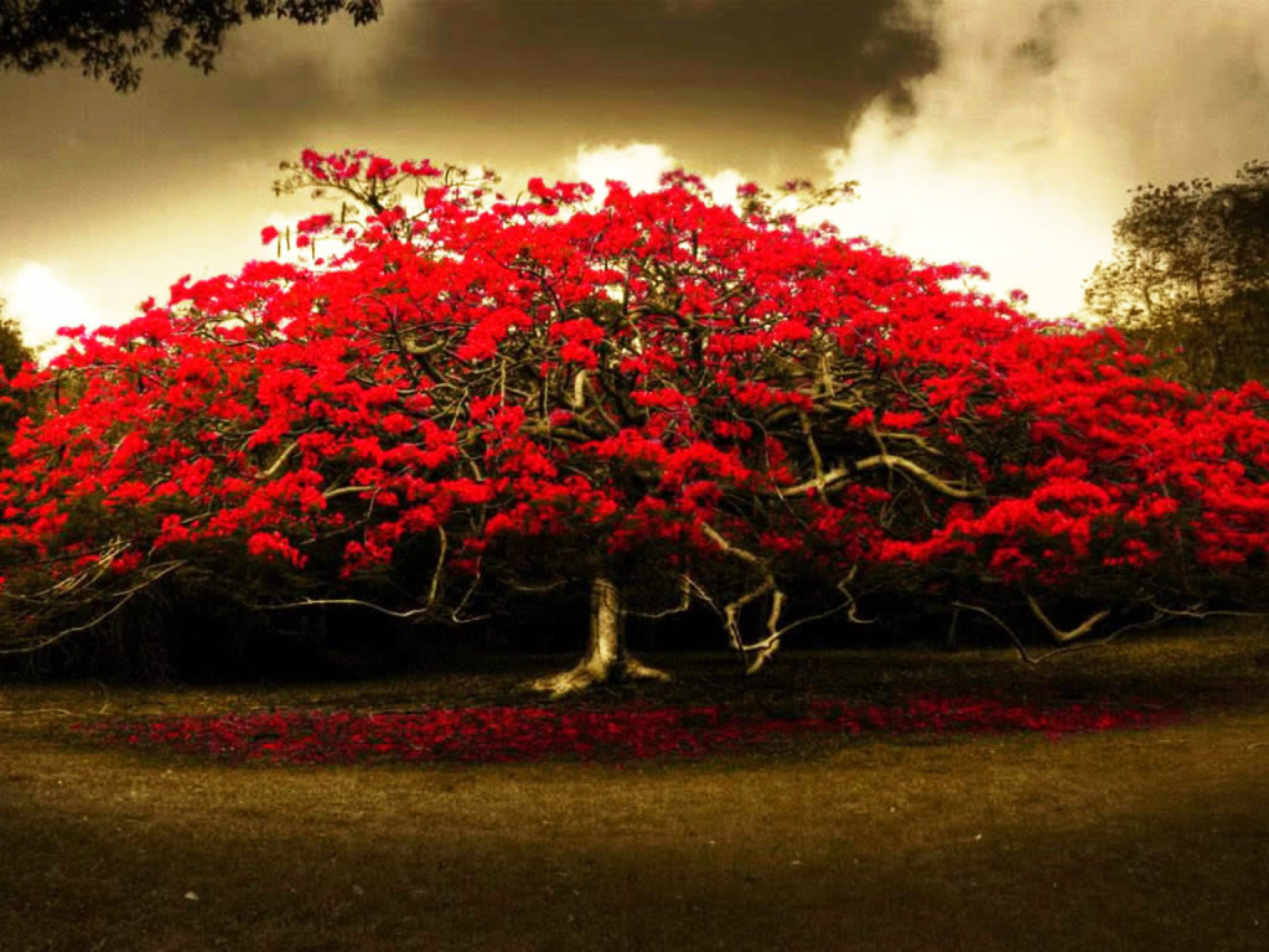 Wallpaper: red flowers tree hd wallpapers 494