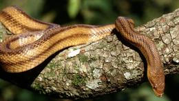 Snake Reptile Animal Animals HD wallpapers 249