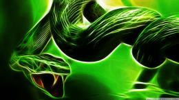 Snakes Snake Reptiles Resolution HD Wallpaper 246