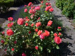 Thanks for visiting this Pictures of rose flower garden postPlease 1701