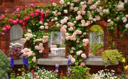 Rose garden Wallpapers Pictures Photos Images 1386