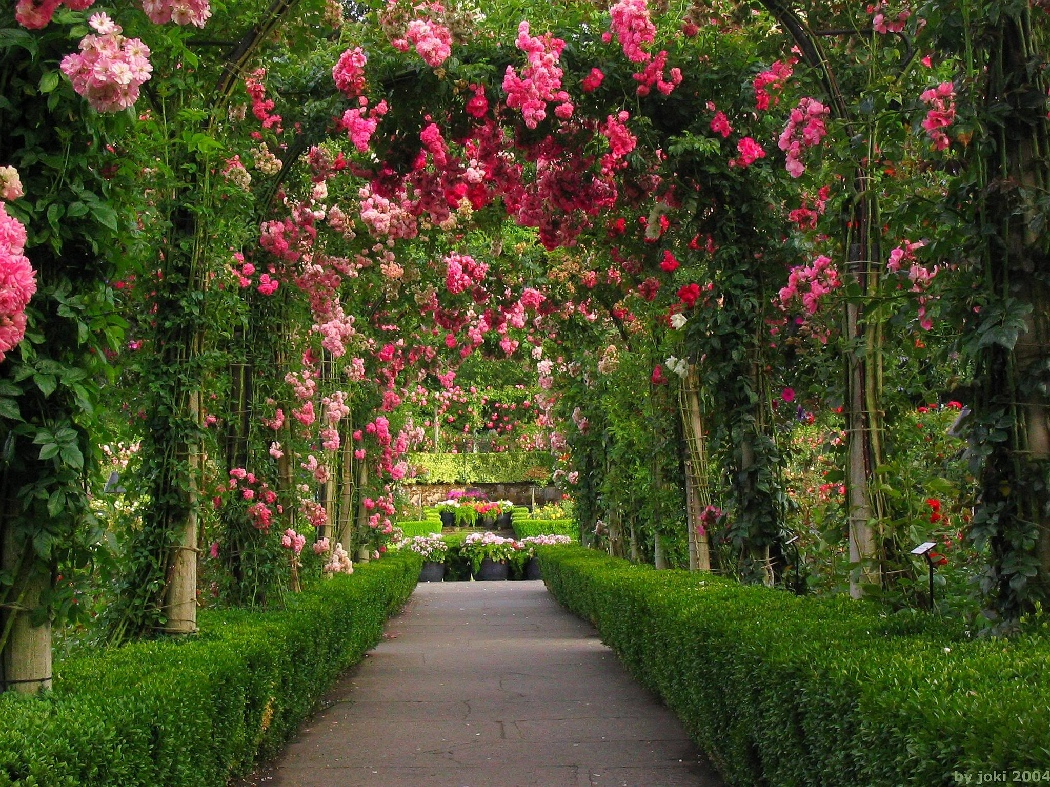 Hoontoidly Rose Flower Garden Wallpaper Images