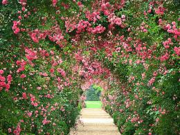 Rose Garden WallpapersHD Wallpapers 1823