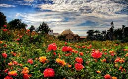 Rose Garden Wallpapers 1155