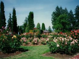 Rose Garden Wallpaper Qneknhfw 1123