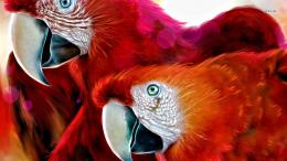 Animals Bird Macaw Parrot 616