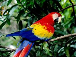 Macaw Wallpapers 321