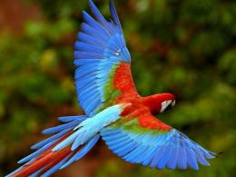 Scarlet Macaw Birds Wallpapers 1428