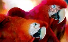 Scarlet Macaw Birds Wallpapers 601