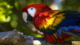 scarlet macaw new background image scarlet macaw bird wide wallpaper 1254