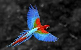 Scarlet Macaw Birds Wallpapers 634