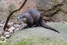 hd wallpapers otter hd wallpapers otter hd wallpapers otter pictures 1834
