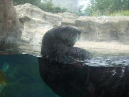 Oregon aquarium sea otter ocean animals 929