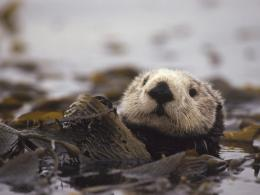 Cute Baby Otters 9106 Hd Wallpapers 1876