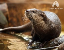 wallpapers otter hd wallpapers otter hd wallpapers otter hd wallpapers 243