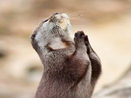 hd wallpapers otter hd wallpapers otter hd wallpapers otter pictures 1963