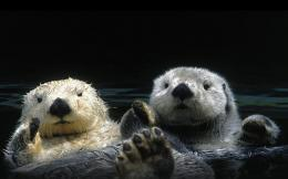 viewing animals otters hd wallpaper color palette tags animals otters 602
