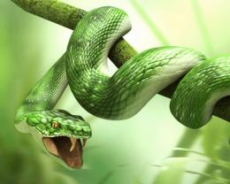 snake hd wallpapers best desktop background photographs widescreen 491