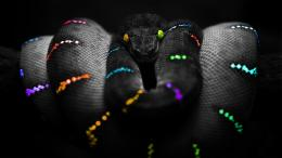 Wallpaper Abyss Explore the Collection Reptiles Snakes Snake 178150 185
