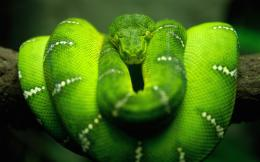 2560x1600 Tree Snake desktop PC and Mac wallpaper 1873