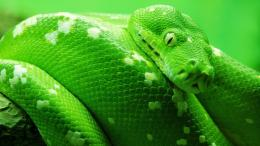 desktop hd snake wallpapers 1080p desktop hd snake wallpapers download 1885
