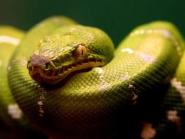 top desktop snake wallpapers hd snakes wallpaper 4 green snake jpg 1632