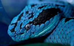 Blue snake wallpapers and images 118