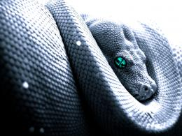 hd snakes wllpapers cobra hd snakes wallpapers cobra hd snakes 575