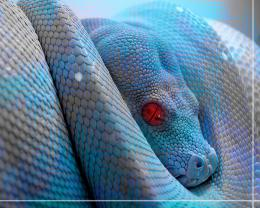 Blue Snake Anime HD Wallpaper 366