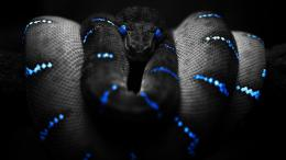 Snake Wallpapers 469