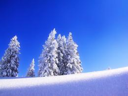 Tag: Snow Wallpapers, Backgrounds, Photos, Pictures,and Images for 419