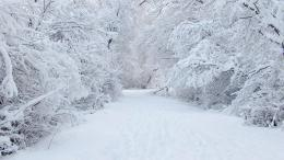 winter snow wallpaper snow backgrounds snow background winter 25988 894