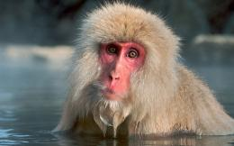monkeys snow widescreen high resolution wallpaper download snow monkey 1645