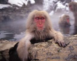 monkeys hot springs spring 1920x1080 wallpaper Art HD Wallpaper 803