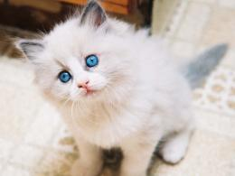 turkish angora cats free download beautiful hd wallpapers of turkish 1220