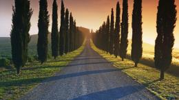 Download wallpaper Cypress trees along the road, Tuscany, Italy: 1800