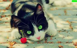 Beautiful Pictures green eyes cat 828
