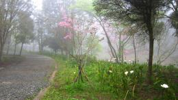 File Name : walking in the misty road 325165 jpg Resolution 1132
