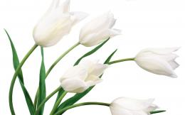 White Flower WallpapersHD Wallpapers 1566