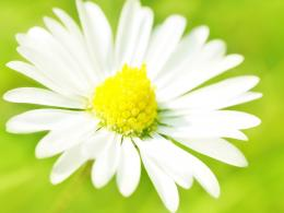 white flower hd wallpapers white flower hd wallpapers white flower hd 1340