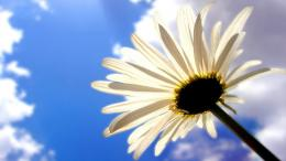 White Flower In Sky HD Wallpaper 1860