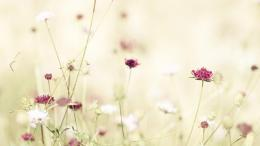 Download Wallpapers Tumblr Flowers Nature White Flower Free Hd Images 1428
