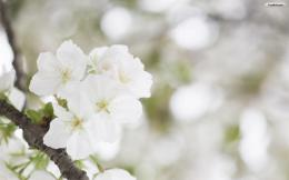 white flower background 842