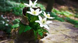 White Flowers HD Wallpapers 216