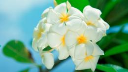 White Flowers HD1080P HD wallpaper 1682
