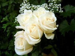 White Flowers HD Wallpapers 1805