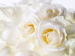 White Flowers HD Wallpapers 272