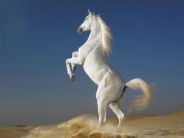 White Horse best computer backgrounds Desktop hd Wallpaper and make 1090