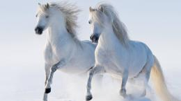 White Horses Wallpaper 873